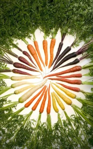 Karotten-Vielfalt