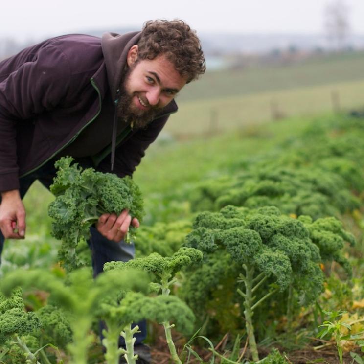 Max bei der Grünkohl-Ernte