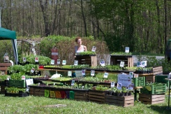 Pflanzenmarkt in Ollersdorf, 25.04.2015