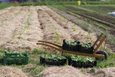 Große Pflanzaktion - Zucchini, Kürbisse, Gurken