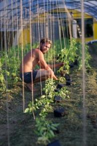 Pardeiser Pflanzung