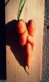 Karotten-Kuscheln
