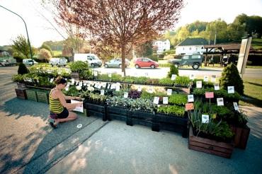 Pflanzenmarkt in Limbach 2018