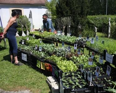 Sepplashof am Pflanzenmarkt